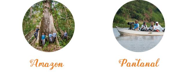 Amazon Pantanal Trip Brazil Gondwana