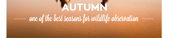 Autumn Brazil Wildlife Observation Gondwana