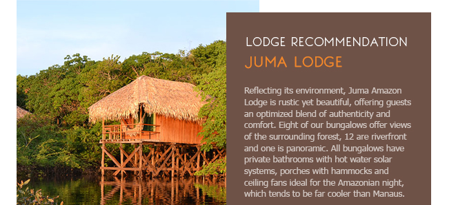 Juma Lodge Amazon Trip Gondwana Brasil