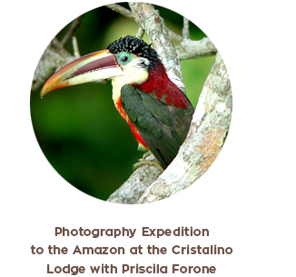 Amazon Photographic Expeditions trip Gondwana Brasil