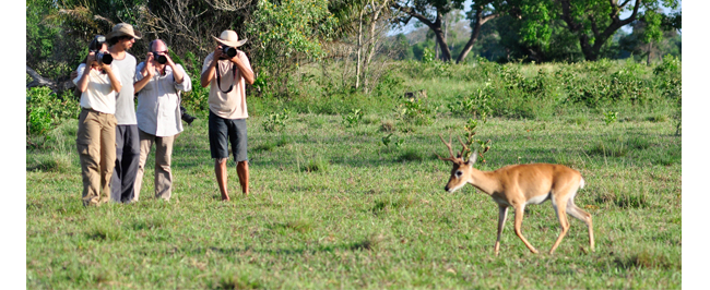 Trip Pantanal Brasil Gondwana