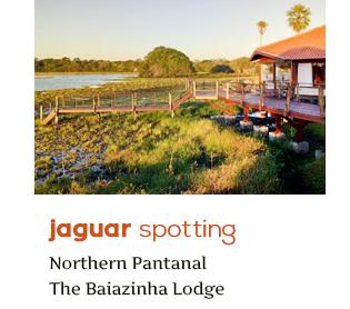 Jaguar Spotting Trip Gondwana Brazil Pantanal