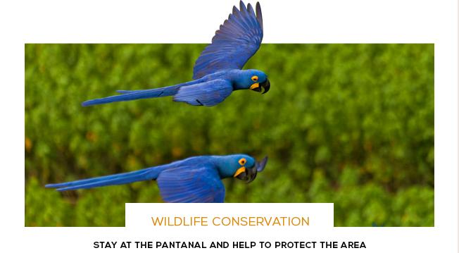 Gondwana Brazil Araras Lodge Pantanal Trip